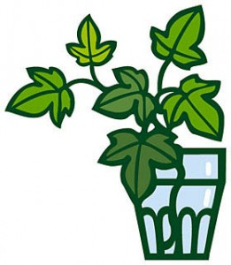 観葉植物レンタルの内容