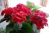 お花のこだわり