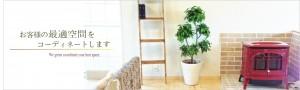 観葉植物レンタルのグリーンプランツはせがわです。