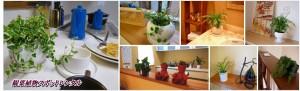 観葉植物スポットレンタル