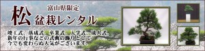 松盆栽レンタル