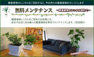 観葉植物のレンタルをご契約すると、今お育ての観葉植物をキレイにします