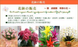花鉢の販売