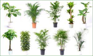 観葉植物のサンプル