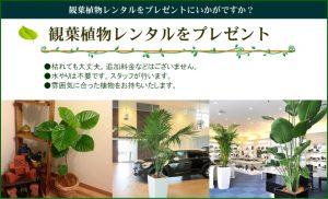 観葉植物レンタルをプレゼントにいかがですか?