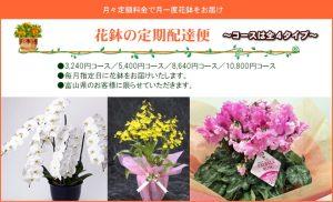 花鉢の定期配達便
