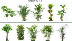 観葉植物サンプル