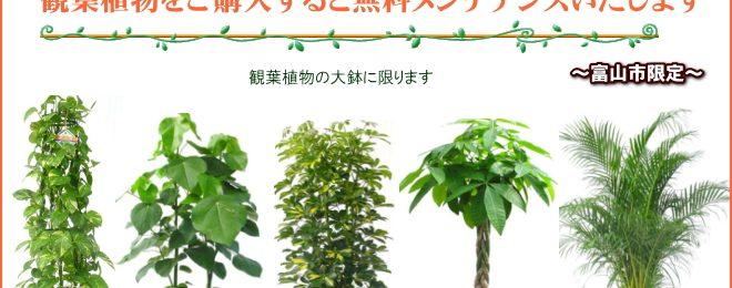 観葉植物をご購入すると無料でメンテナンス致します