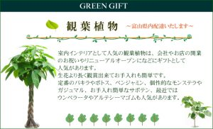 観葉植物の販売