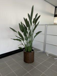 観葉植物レンタル/デザインレンタル3